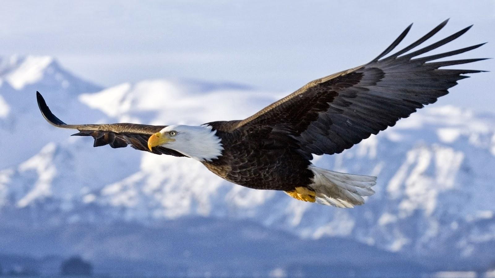 Vuela alto como un/a Águila