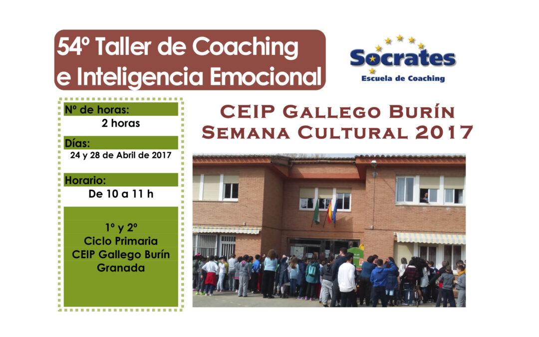 Taller 54: CEIP Gallego Burín (Granada)